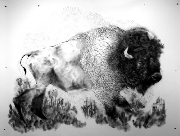 Leah Gold, Bison, Drawing, Illustration, Black and White, Artist in Residence