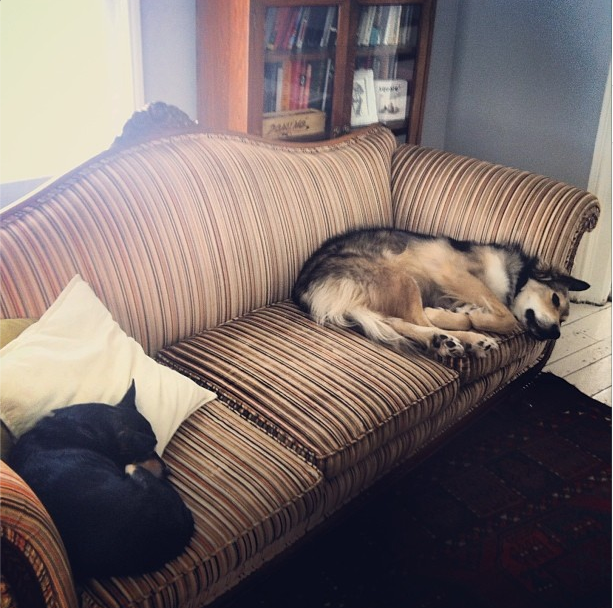 Rico, Couch, Dog, Sleeping