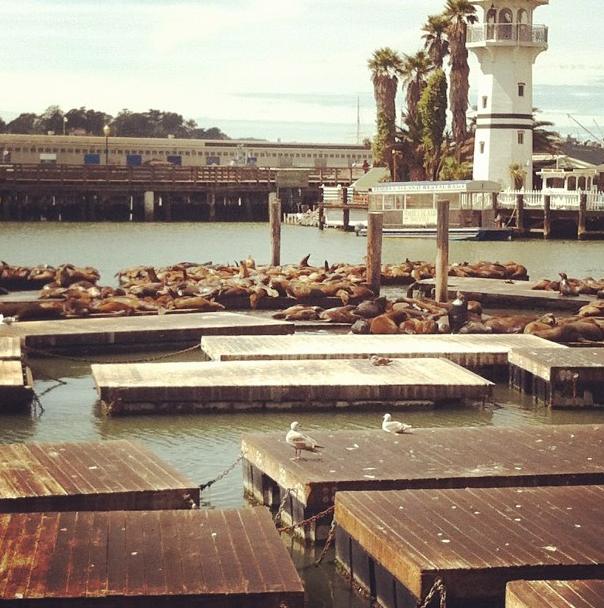 Southern Graphics Conference International, San Francisco, Spark Box Studio, Sea Lions, Pier 39